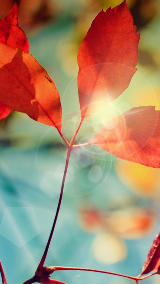Amazing iPhone 6 Wallpapers and Textured Backgrounds