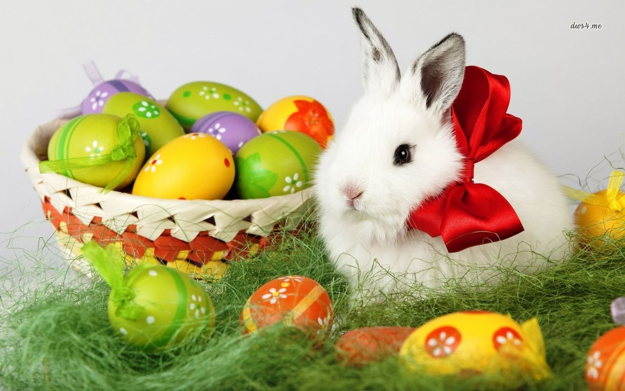 happy easter bunny eggs wallpaper
